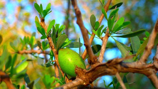 ovoce na stromě